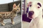 21 foto ci mostrano quanto la genetica possa essere imprevedibile negli animali