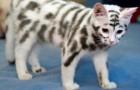21 gatti assolutamente irresistibili per particolarità e simpatia