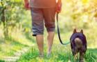 Caminar es el mejor modo para curar el alma de las energías negativas