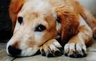 Tener un perro es el regalo mas bello que podemos hacernos a nosotros mismos y a nuestra familia