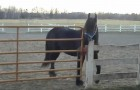 Wer befreit denn da die Pferde? ;)