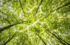 De aarde heeft 1 triljoen bomen nodig om koolstofdioxide in de lucht te kunnen verwijderen