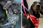 Un perro viene atado y tirado en una zanja, pero el culpable comete un error que le costará caro