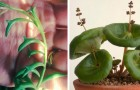 10 incredibili piante da appartamento di cui probabilmente ignoravi l'esistenza