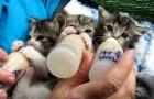 Cutest kittens ever !!