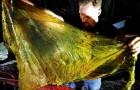 Onderzoekers vinden een dode walvis met 40 kg plastic in de maag, waaronder tasjes en rijstzakken