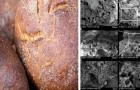 Gli archeologi hanno trovato del pane risalente a 14.000 anni fa, molto prima della rivoluzione agricola