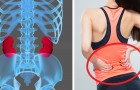 I reni sono organi fondamentali: ecco 8 semplici abitudini per mantenerli in salute
