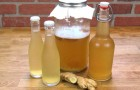 How to prepare ginger water, a precious ally with numerous beneficial qualities