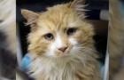 Een kat reist 20 km om terug te keren naar zijn baasjes, maar dan willen ze hem laten afmaken