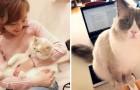 Un'azienda giapponese ha adottato dei gatti per ridurre lo stress lavorativo, e i risultati sono sorprendenti