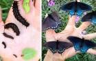 Deze jongen helpt een populatie van zeer zeldzame vlinders door ze in zijn tuin te kweken