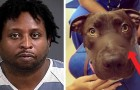 A man tied shut the muzzle of his dog with duct tape and the judge inflicts an exemplary sentence on him!