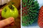 Alcune immagini di vegetali che si sono rifiutati di marcire e hanno sviluppato una nuova vita