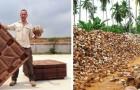 Ein Unternehmen produziert Paletten, ohne Bäume zu fällen: Die Erträge sind noch besser als bei herkömmlichen Paletten