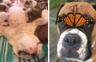 Deze dieren verzachten je hart en veranderen je dag ten goede