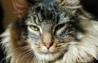 Les chats reconnaissent très bien la voix de leur maître, mais ils décident de l'ignorer