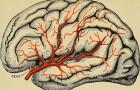 C'è un'evidenza sempre maggiore che il Parkinson NON si origini dal cervello
