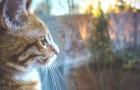 Ter um gato em casa afasta a negatividade: eles mandam embora os espíritos malígnos e fazem bem para a alma