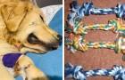Een wanhopig baasje waarschuwt over de gevaren van touwspeelgoed na het ongeluk met haar Golden Retriever