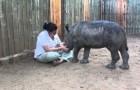 Il Rinoceronte Orfano Dimostra Tutto Il Suo Affetto