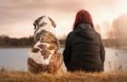 La mort d'un animal fait autant de mal que la perte d'un être cher, dit cette étude psychologique