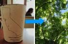 Deze biologisch afbreekbare koffiebekers bevatten zaden: als je ze weggooit, worden het bomen