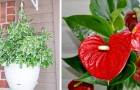 Here are 17 plants that can clean the indoor environment of our homes, certified by NASA
