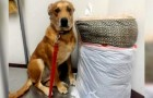 He is abandoned by his owner along with his kennel bed and his toys, but luckily for him, a new life will soon begin