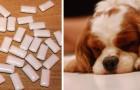 En hund riskerar livet för ett banalt misstag och därför vill hans matte varna alla för den här faran