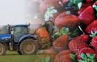 Voici les fruits et légumes les plus contaminés par les pesticides qui devraient être remplacés par ceux bio