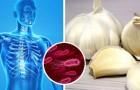 11 antibióticos naturales que nos ayudan a eliminar las bacterias de nuestro cuerpo sin utilizar fármacos