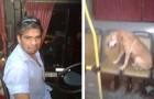 El chofer del autobús ve un perro asustado bajo la lluvia y decide de hacerlo subir. una mujer documenta el tierno episodio.
