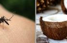 L'olio di cocco: facile da preparare a casa e ottime repellente naturale contro le zanzare
