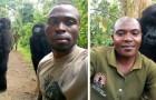 Les gorilles survivants du braconnage posent pour des selfies avec des rangers au Congo