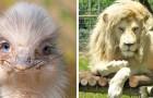 23 animaux qui méritent la couverture d'un journal tellement ils sont beaux sur ces photos