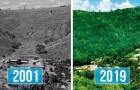 Marito e moglie piantano 2 milioni di alberi in 20 anni, riportando in vita un'intera foresta