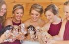 Dimenticate i fiori: queste damigelle hanno portato in chiesa dei graziosi cuccioli per aiutarli nell'adozione