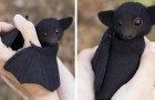 Dieser Künstler kreiert Tiere aus kardierter Wolle, die echt aussehen: Hier sind seine besten Arbeiten