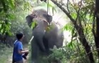 What would you do if an elephant charges at you?