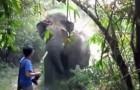 Wie würdest du auf eine Attacke von einem Elefanten reagieren?