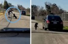 This dog desperately chases his owner's car after being abandoned