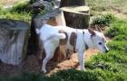 Perché i cani raschiano il terreno dopo aver fatto i bisogni?