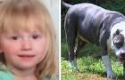 A menina desaparecida há dois dias volta para casa sã e salva: o seu pit bull a protegeu dia e noite