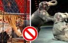 Il Regno Unito mette al bando l'utilizzo di animali selvatici nei circhi