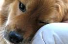 8 modos com o qual o seu cachorro diz que te ama