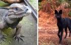 15 espèces rarissimes dont vous ignoriez leur existence dans la nature