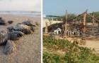 Vandalen verwoesten en verbranden een kamp voor het redden van zeeschildpadden