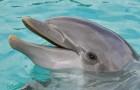 Una ricerca conferma che i delfini parlano e comunicano tra loro come noi umani