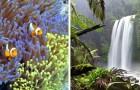 Niet alleen het Barrièrerif: zelfs het oudste regenwoud in de wereld is aan het verdwijnen, maar niemand doet er iets aan